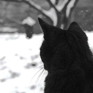 Contemplating Winter by AngieDavies