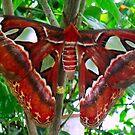 Moth by Dawn B Davies-McIninch