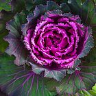 the Bradley Cooper of Cabbages? by alan shapiro