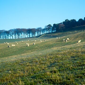 Sheep Hill (1) by procrest