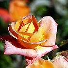Dew You Love Roses? by © Loree McComb