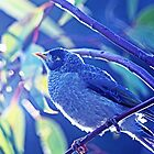 A Beautiful Blend with a Noisy Miner by imaginethis