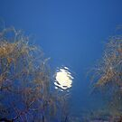 Full Moon Rising..... by Larry Llewellyn