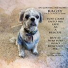 In loving memory of Ragsy by vigor