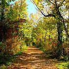 Autumnal path by annalisa bianchetti