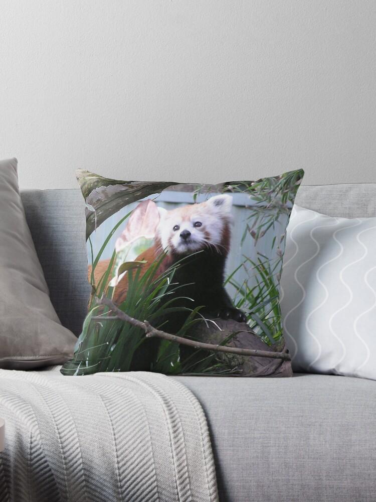 Red Panda  by Virginia McGowan