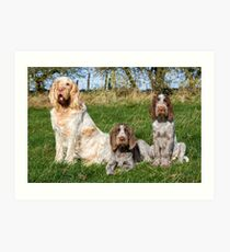 Italian Spinoni Orange and White Adult with Brown Roan Puppies Portrait Art Print