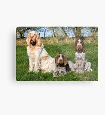 Italian Spinoni Orange and White Adult with Brown Roan Puppies Portrait Metal Print