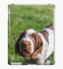 Italian Spinone Puppy Portrait iPad Case/Skin