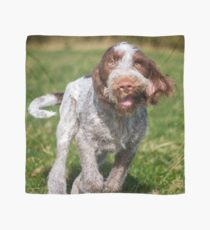 Brown Roan Italian Spinone Puppy Dog In Action Scarf