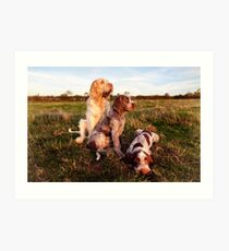 Italian Spinone Orange and White Adult with Brown Roan Puppies Portrait Art Print