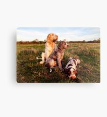 Italian Spinone Orange and White Adult with Brown Roan Puppies Portrait Metal Print