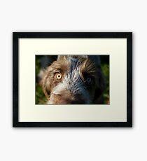 Brown Roan Italian Spinone Puppy Dog Head Shot Framed Print
