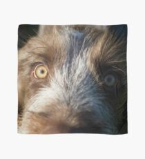 Brown Roan Italian Spinone Puppy Dog Head Shot Scarf