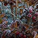 For Larry who is leaving Red Bubble.....The first Hoar Frost in the Black Forest by Imi Koetz