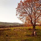 Land - An Evening Walk  by Carl Gaynor