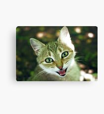 smile of cat  Canvas Print