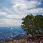 The Tree by Gben