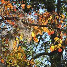 Changing Of The Leaves by Cynthia48