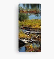 Algonquin Provincial Park Wetlands Canvas Print