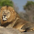 The king of the Wild! by Anthony Goldman