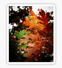Oak Leaves In Autumn Sticker