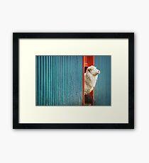 A Sheep Named DJ Framed Print