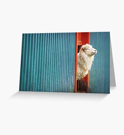 A Sheep Named DJ Greeting Card