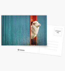 A Sheep Named DJ Postkarten
