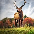 Watching Over the Herd by Kathy Weaver