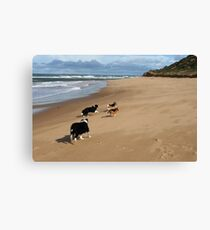 Borders & Beagles run free - Point Lonsdale  Victoria Canvas Print