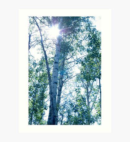 Sun through birch. Art Print