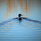 Duck Waves by annAHorton