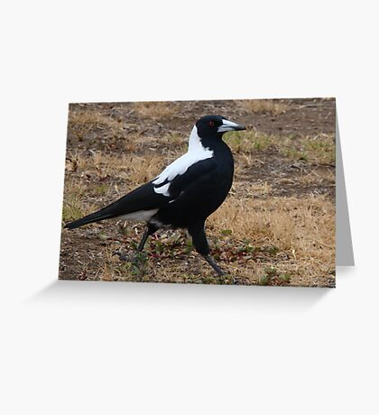 Strutting Greeting Card