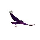Crow Flying - Purple by Gareth Vanderhope