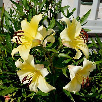 Beautiful Yellow Lilies by Retiree