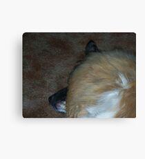 Sleeping T-Bone Canvas Print
