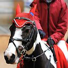 Christmas pony by Alan Mattison