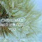 CHRISTMAS WISHES by Coloursofnature