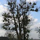 Tree of XXI century by Antanas