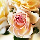 Beautiful Roses by imaginethis