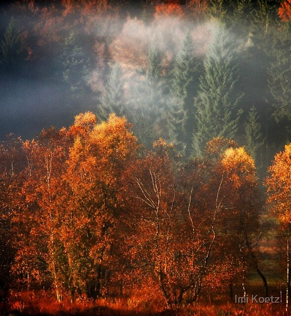 The first Rays of Sun in Autumn by Imi Koetz