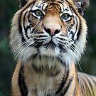 Tiger eyes by Kelly Robinson