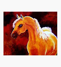 Horse in the Light Photographic Print