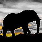 sunset & elephant by madi98477