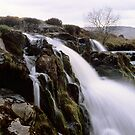 Loup o'Fintry, large format by Tim Haynes