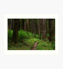 Forested Trail Art Print