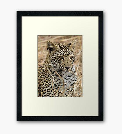 Vegetarian Leopard?  Framed Print