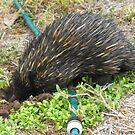 True Australian Garden Visitor  by 4spotmore