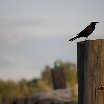 Bird on a wooden post by franceslewis
